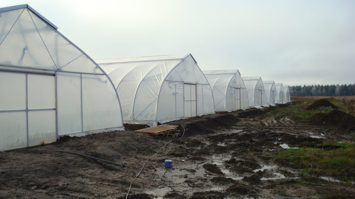 Gothic style greenhouses