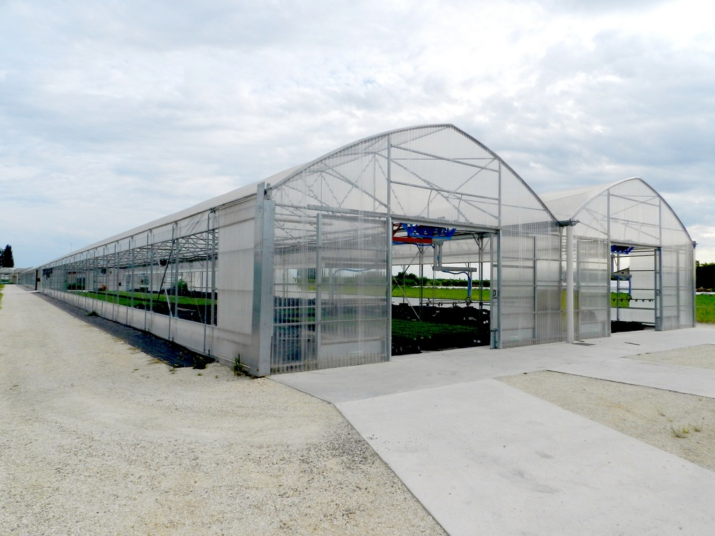 Multispan greenhouses