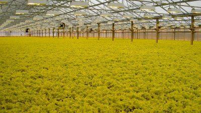 Salatiliinide ja taimelaudade ehitus