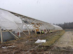 EVA greenhouse plastic | Topgreen